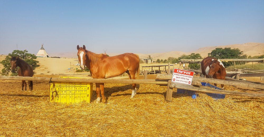 זית המדבר - חוות סוסים