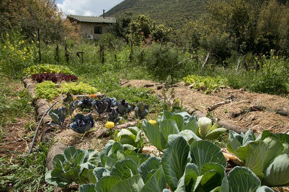 חוות הנמורה 5